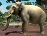 Sumatran-elephant-zootycoon3