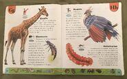 Weird Animals Dictionary (8)