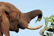 152304-004-3D354686 Elephant