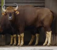 Bronyx Zoo TV Series Guar