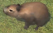 Capybara-zootycoon3