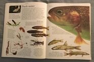 DK Encyclopedia Of Animals (27)