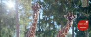 Girafstarkthotadundersida top desktop