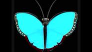 Safari Island Blue Morpho