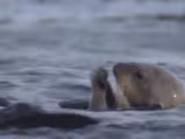 Amazing-animals-activity-center-sea-otter