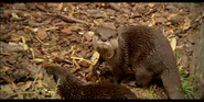 Canberra Zoo Otters