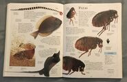 DK Encyclopedia Of Animals (78)