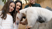 Oregon Zoo Tamandua