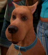 Scooby Doo in Scooby Doo 2- Monsters Unleashed
