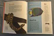 The Dictionary of Ordinary Extraordinary Animals (2)