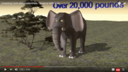 An Elephant Is A Mammal