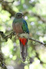 Quetzal-f-db2