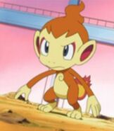 Ash's Chimchar