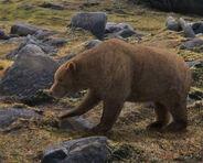 Cave bear ursus spelaeus by leogon-d8t774u