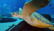 Georgia Aquarium Sea Turtle