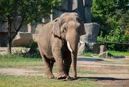 Photo-detail-asia-asian-elephants