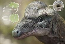 Triopticus-updated