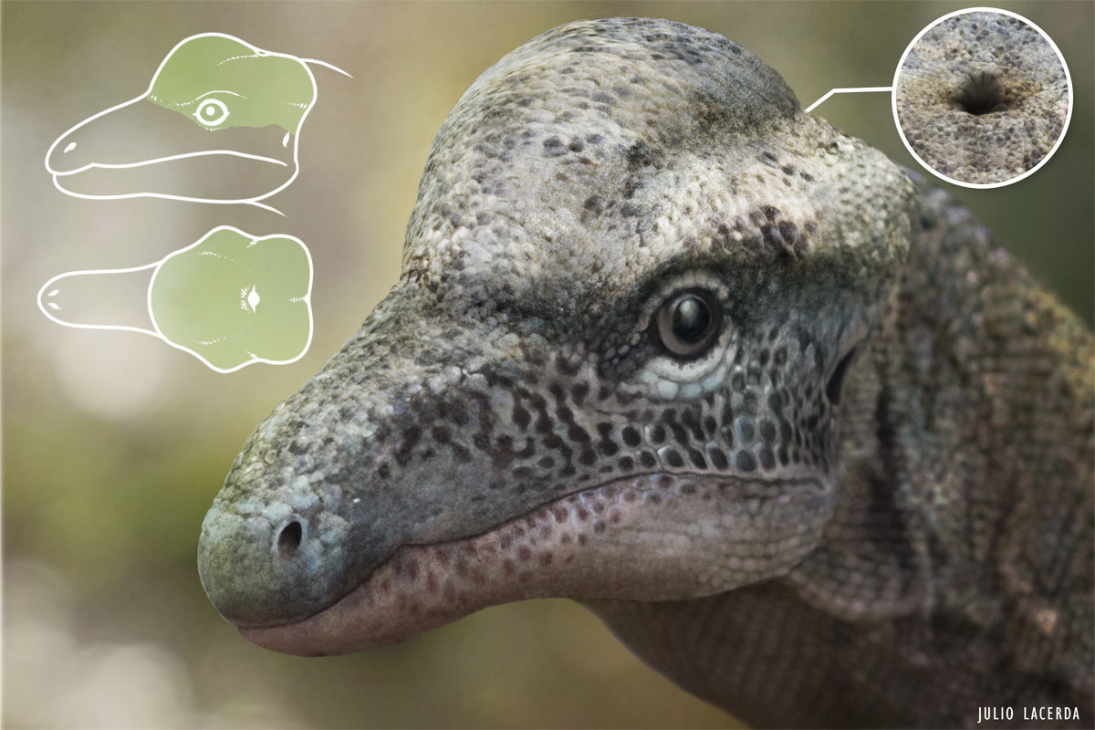 Image - Triopticus-updated.jpg | The Parody Wiki | FANDOM powered by ...