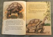 Awesome Animals (Road to Reading) (19)