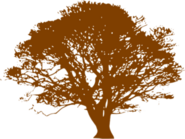 Brown-tree-md-1-