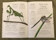 Creepy Crawlies (Over 100 Questions and Answers to Things You Want to Know) (6)