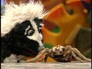Do you ever attack skunks?