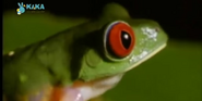 MMHM Red-Eyed Tree Frog