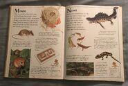 The Kingfisher First Animal Encyclopedia (46)