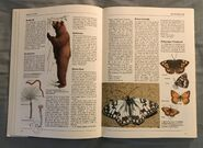 The Kingfisher Illustrated Encyclopedia of Animals (22)