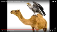Vultures and Camels