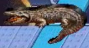 Crocodile reader rabbit 1st grade