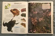 DK Encyclopedia Of Animals (36)