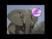 E is for Elephant