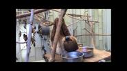Fresno Zoo Sloth