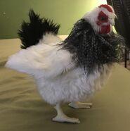 Harriet the Hen