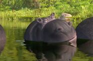 JungleBunch Hippo