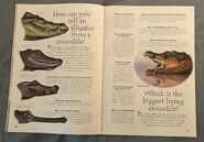 Reptiles (Over 100 Questions and Answers to Things You Want to Know) (9)