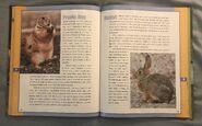 Scholastic Encyclopedia Of Animals (41)