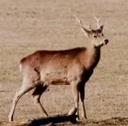 Zoo 2015 Deer