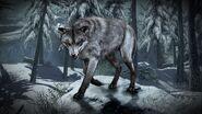 COD Wolf