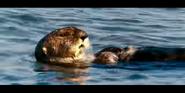 Oceans 2010 Sea Otter