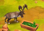 Reindeer-zoo-2-animal-park