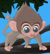 Babybaboon-img