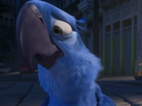 101 Birds