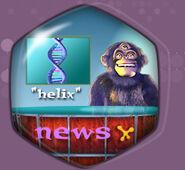 Report monkey