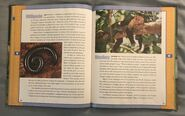 Scholastic Encyclopedia Of Animals (31)