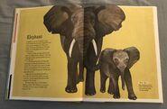 The Dictionary of Ordinary Extraordinary Animals (14)