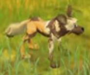 Wild Dog Safari Adventures