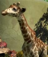 Angolan-giraffe-zootycoon3