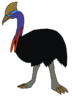 Casper the Cassowary